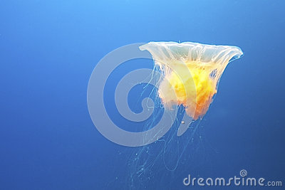 Open Jellyfish