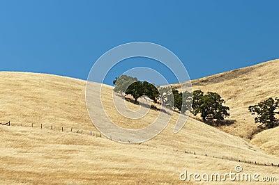 Open range grassy hillside