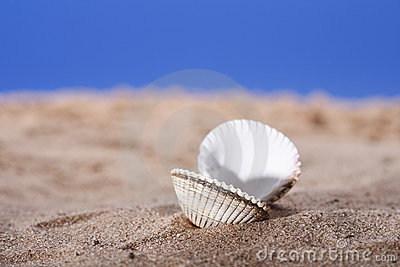 Open sea shell on beach sand and blue sky