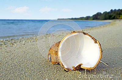 Opened coconut on sandy sea shore