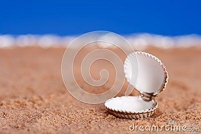 Opened sea shell on beach sand and blue sky