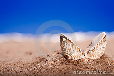 Opened sea shell seashell on beach sand