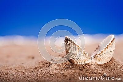 Opened sea shell seashell on beach sand