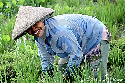 Operaio della risaia di riso Fotografia Editoriale