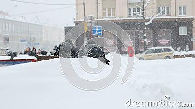 Opgeblazen duiven op de verschansing op een koude de winterdag in de stad stock videobeelden