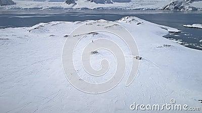 Opinião aérea do pinguim do adelie da exploração da Antártica filme