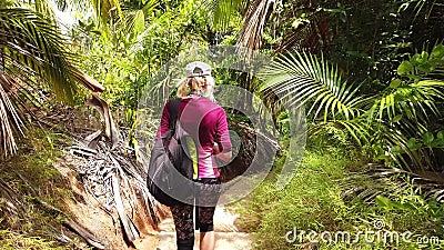 Opinião de terceira pessoa da caminhada da palmeira de Coco de Mer vídeos de arquivo