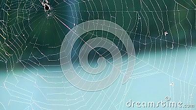 Opinião do macro da aranha vídeos de arquivo