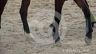 Opinión lenta de la cacerola sobre los enganches de los caballos que corren a través de un campo polvoriento almacen de video