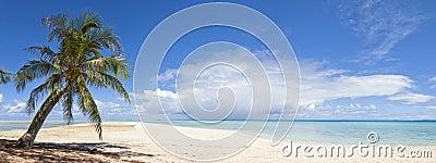 Opinión panorámica de la palmera y de la playa blanca de la arena
