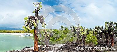Opuntia cactus forest