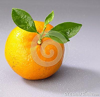 Free Orange Stock Photos - 872593