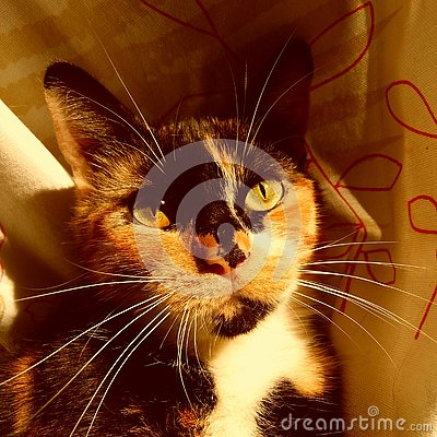 Free Orange And Black Cat`s Eyes Stock Photography - 130446152