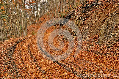 Orange autumn path through forest