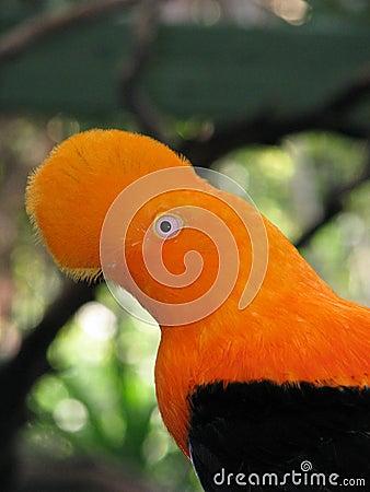 volim narančasto - Page 2 Orange-bird-thumb3994622