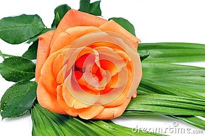 Orange blooming flower