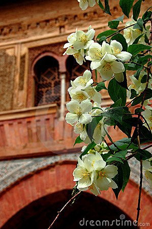 Orange blossoms of Alhambra