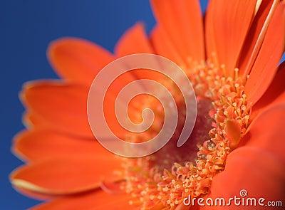 Orange on blue 3