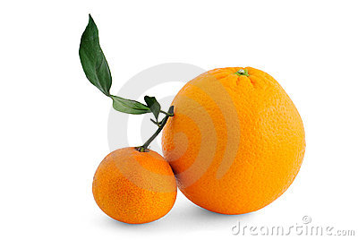 Orange with branch