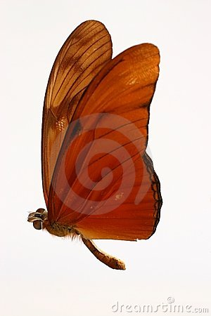 Orange Butterfly Stock Photo - Image: 2619440