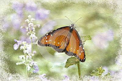 Orange Butterfly in garden on purple flowers