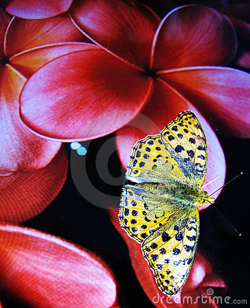 Free Orange Butterfly Perched On The Flower Of A Screen Royalty Free Stock Images - 21527909