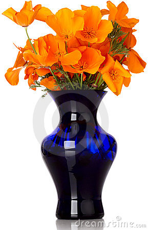 Orange California Poppy s In Blue Vase