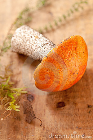 Orange-cap boletus mushroom on aspen wooden board