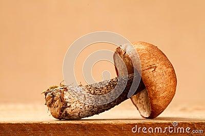 Orange-cap boletus mushroom on wooden board