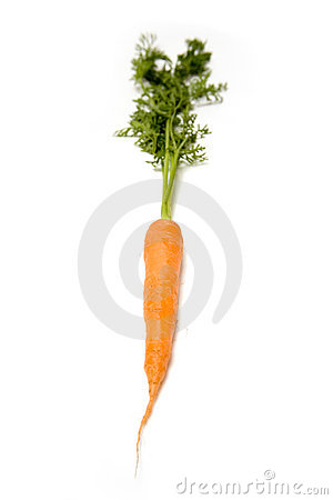 Orange carrot root