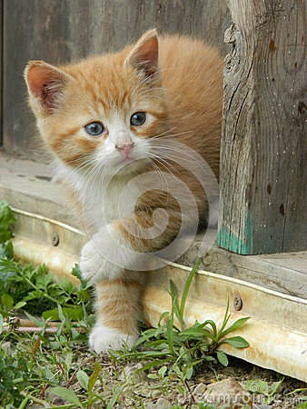 Free Orange Cat Royalty Free Stock Photography - 44672597