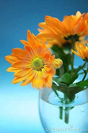 Free Orange Chrysanthemum Royalty Free Stock Photos - 7617878