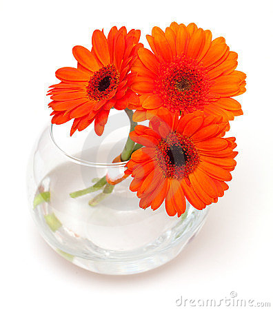 Orange daisy flowers in a glass vase