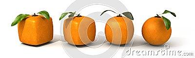 Orange evolution