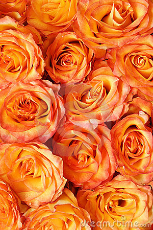 Free Orange Floral Background Royalty Free Stock Photography - 9662397