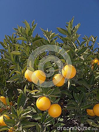 Orange with Flower