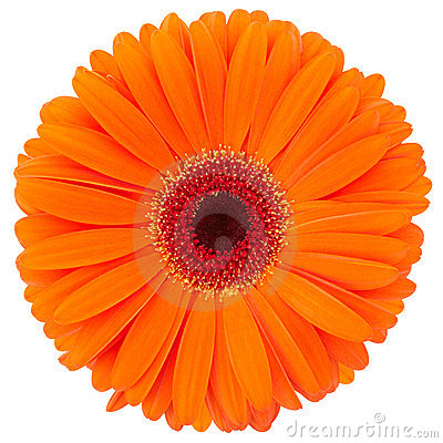 Free Orange Flower Stock Photos - 19524563