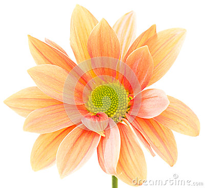 Free Orange Flower Royalty Free Stock Image - 28128256
