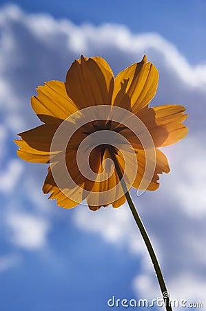 Orange flower against blue sky