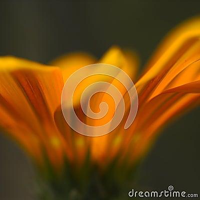 Orange Flower Details
