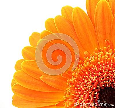Orange flower. macro