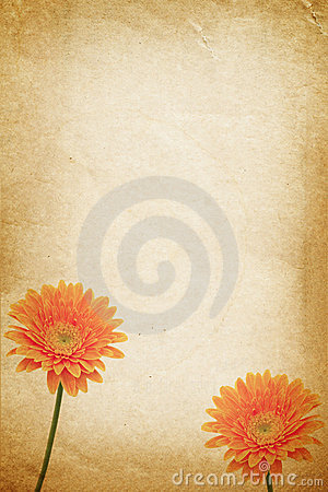 Orange flower and old paper