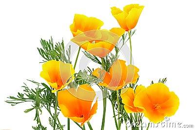 Orange flower-spark