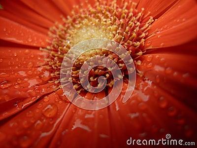 Orange Flower Stamen