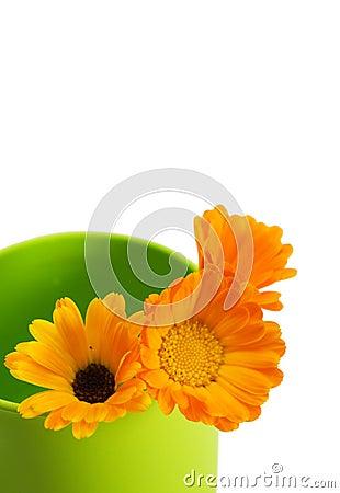 Free Orange Flowers Stock Image - 2676371