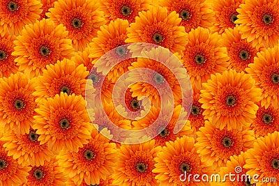 orange flowers background stock photo image 1736710