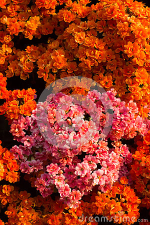 Orange flowers background