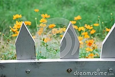 Orange flowers and fence