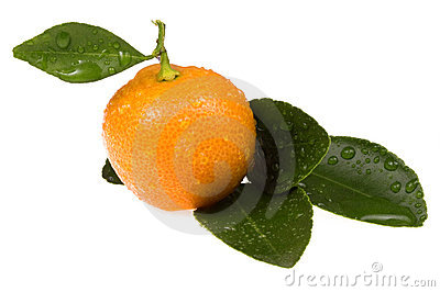 Orange fruit. sweet calamondin