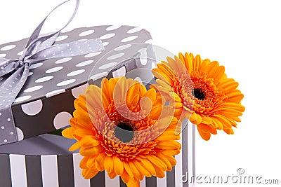 Orange gerber in a giftbox